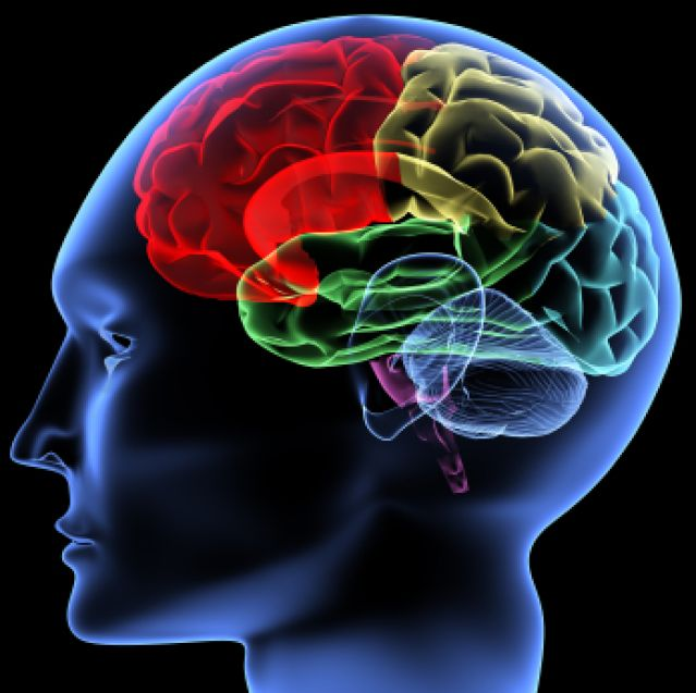 Diferentes zonas cerebrales se activan cuando se aprende un idioma