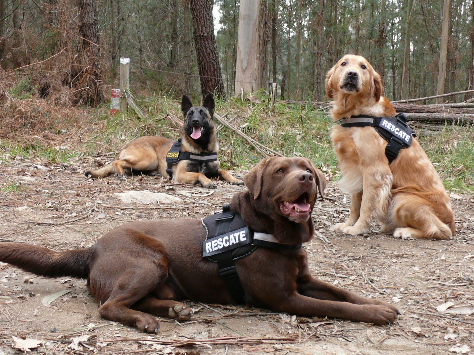perros-wearables