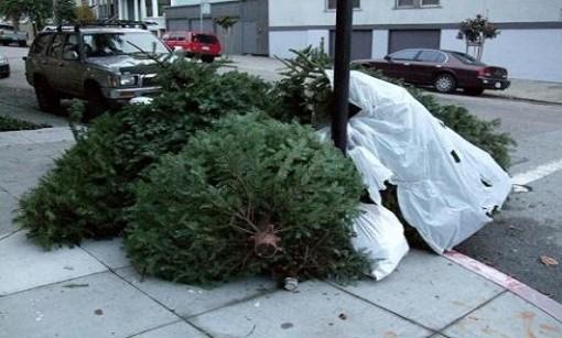 Como Reciclar nuestro árbol de Navidad