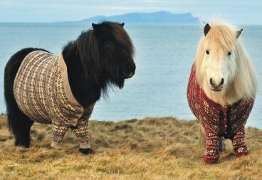 dos-ponis-de-shetland-se-convierten-en-estrellas-virales-1
