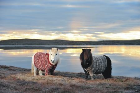 dos-ponis-de-shetland-se-convierten-en-estrellas-virales-2