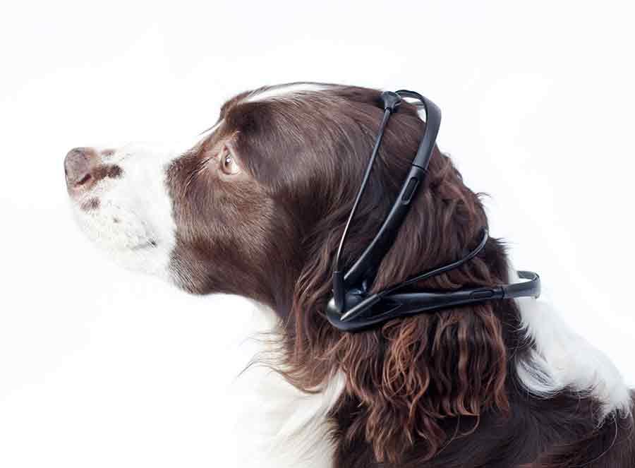 Este es la diadema que tendría el perro y que ayudara a traducir la información cerebral