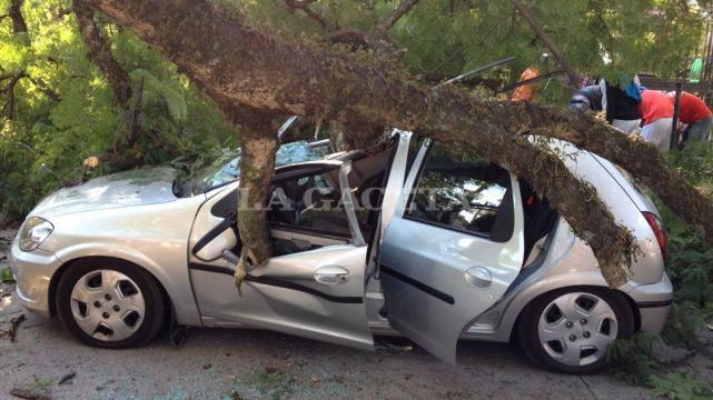 Si un árbol cae sobre tu auto es importante saber que se puede hacer para reparar el daño