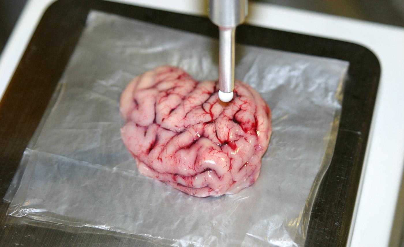 Primeras pruebas en cerebro de cerdo